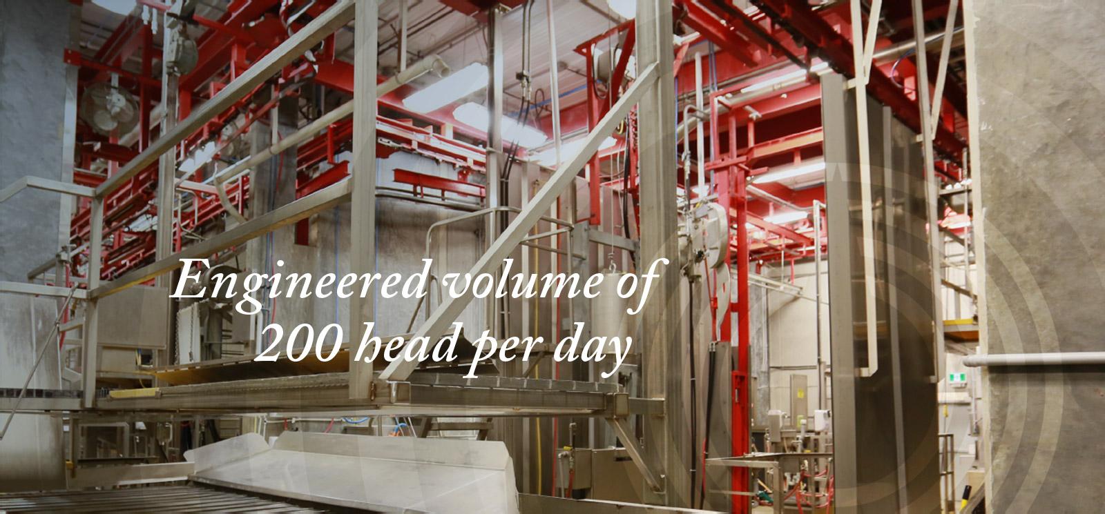 Engineered volume of 200 head per day